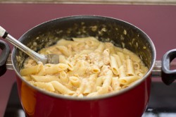 Penne pasta with chicken and cheese