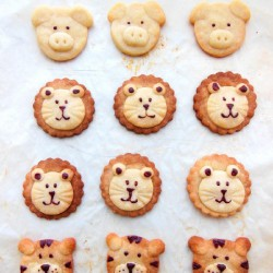 Shortbread Animal Kingdom
