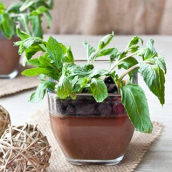 Edible Potted Plants