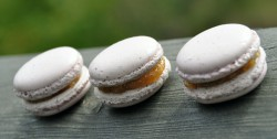 Plum Macarons Recipe
