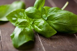 How to Chiffonade Basil Recipe