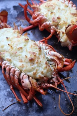 Lobster au Gratin Recipe