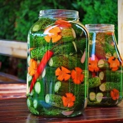 Sun Pickles Recipe