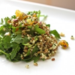 Three Grain Salad with Arugula Pesto
