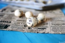 Chocolate Chip Cookie Dough Bites Recipe