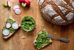 Radish Leaf Pesto Recipe