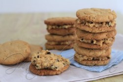 Peanut Free Peanut Butter Cookies Recipe