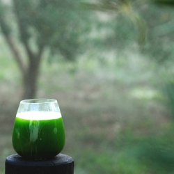 Green Juice with Zucchini and Fennel