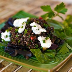 Lentils with Goat Cheese Salad